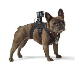 GoPro - Fetch - Dog Harness